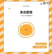 鸿运国际官方网址:全橙告急 | 淮北甜橙一夜之间严重缺货,┈
